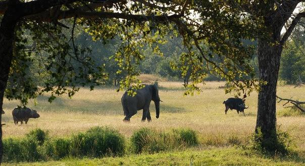 Parque Nacional Limpopo