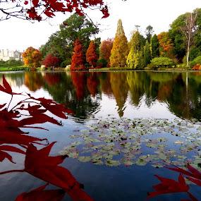 Sheffield Park by Richard Lawes - Novices Only Landscapes