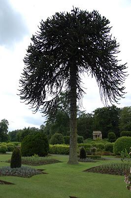 Brodsworth Hall garden 1