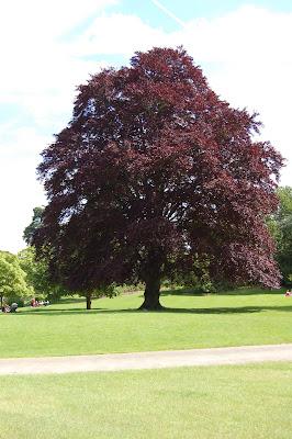 Landscape tree 2