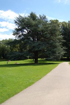 Landscape tree 3