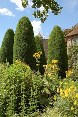 Towering Yews