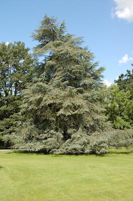 Landscape tree 1
