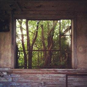 Nature invading by Erin Watson - Instagram & Mobile Instagram