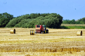 Photo: Travaux agricoles : pressage de la paille en grosses balles