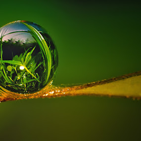 the world in dew by Teguh Santosa - Nature Up Close Flowers - 2011-2013