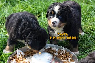 Photo: F PUPIES  Z CICHEJ GORKI