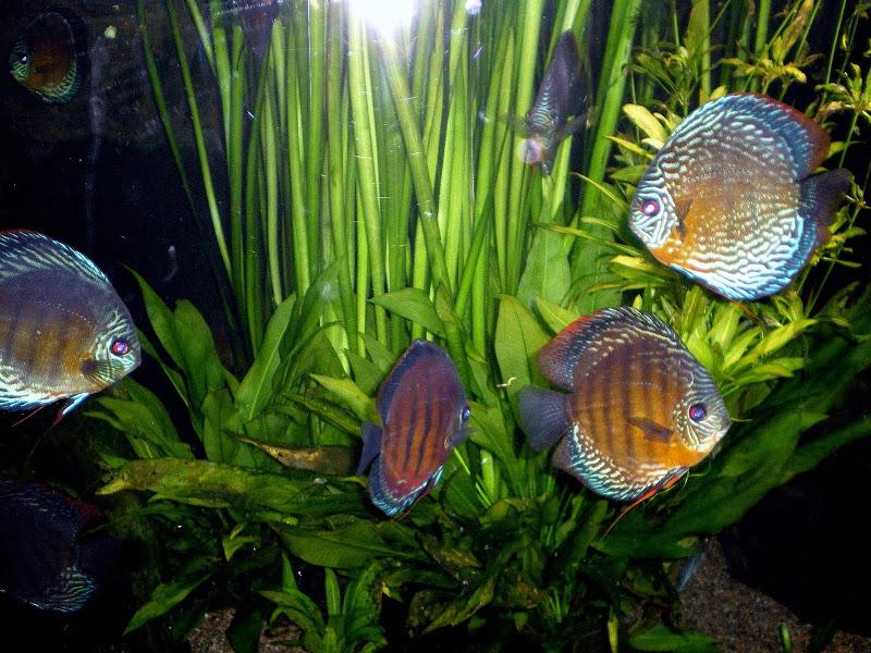 akvario.jpg
