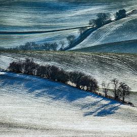 Zimní krajina by Josef Hasík - Landscapes Prairies, Meadows & Fields ( winter, tree, white, landscape, undulation )