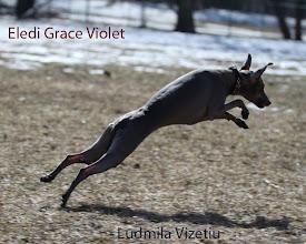 Photo: Eledi Grace Violet ♥ Eledi Grace Alpina