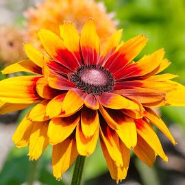 Flower by Dave Lipchen - Flowers Single Flower ( flower )
