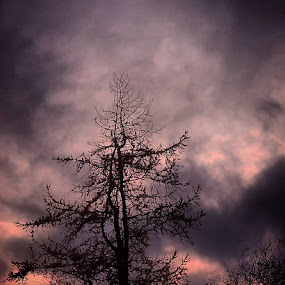 #Sky tripper style by Dawn Morri Loudermilk - Nature Up Close Trees & Bushes