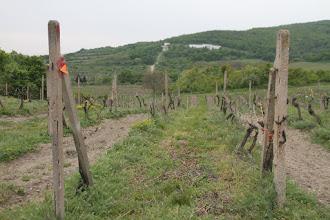 Photo: K cieľu sa v závere ide opäť cez vinohrady (popod vodojem vzadu sa šlo k Hergotovej chate)