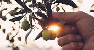 Ofrecen una gama de aceites de oliva virgen extra de muy alta calidad.