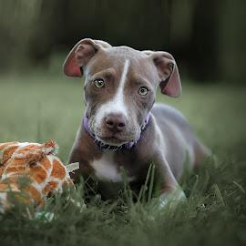 Bella by Pierre Vee - Animals - Dogs Puppies