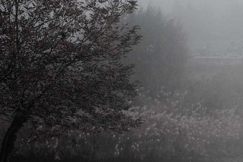 Nebbia sul fiume di Ro51