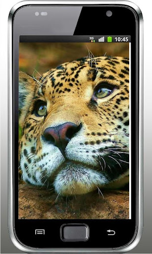 Leopards Collection LWP