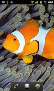 Tapeta Ryby - náhled
