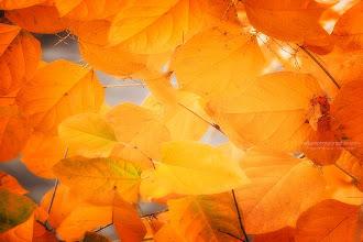 Photo: Seasonal leaves
