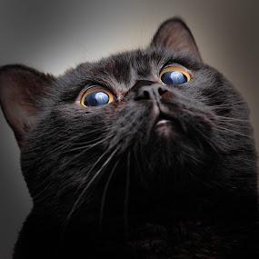 Yoda has seen the light by Felipe Mairowski - Animals - Cats Portraits ( gato, cat, retrato, gatto, light, portrait, black cat, gatto nero, gato preto )
