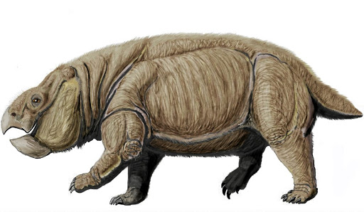 Fossil fuel: Dicynodants were believed to have gone extinct before the age of dinosaurs, but fossils discovered by scientists at the North Carolina Museum of Natural Sciences reveal the reptile was not extinct by the Late Triassic 210-million years ago. Alfred Brown found the rocks in SA in the late 19th century. Picture: WIKIMEDIA COMMONS