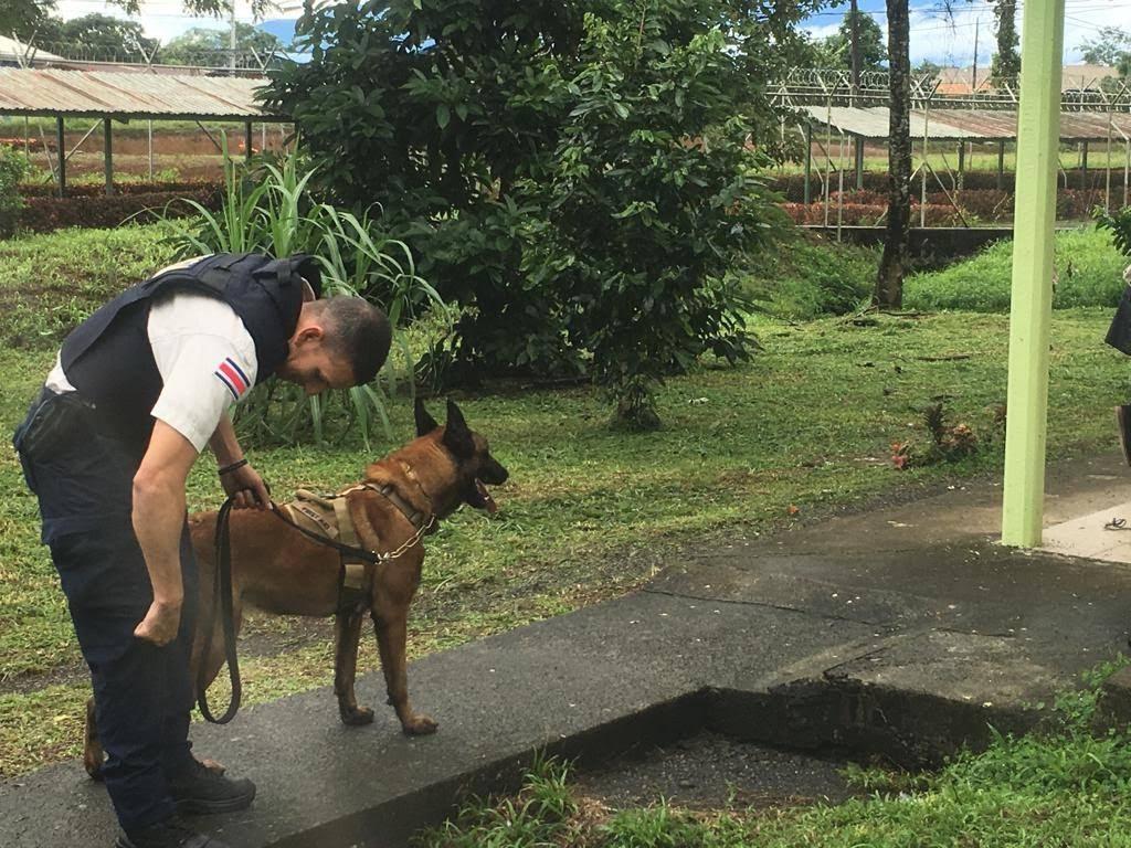 DESMANTELAN RED PARA TRAFICAR DROGAS EN CENTRO PENITENCIARIO DE POCOCÍ; CINCO POLICÍAS DETENIDOS