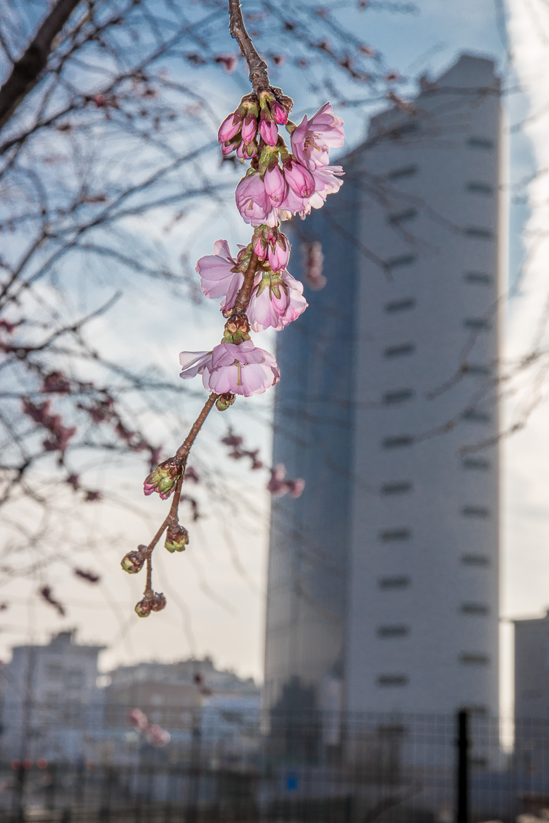Primavera in parco cittadino a Milano di rob-man
