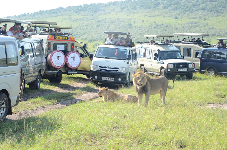 Tourists take photos of lions at Maasai Mara