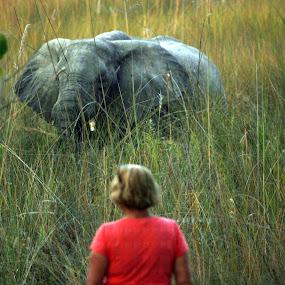 keeping an eye on each other by Sandra Mcgowan - Uncategorized All Uncategorized ( elephant, bushveld, camping site, unfenced area. )