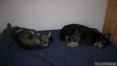 Photo: trötta hundar