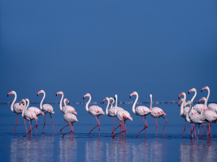 Walvis Bay is home to some of Namibia's most breathtaking natural scenery and the perfect place to spot flocks of bright flamingos.