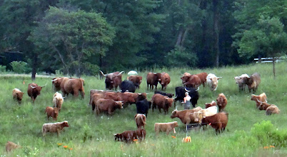 Photo: Long distance shot of Jode checking on the herd...