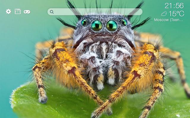Spiders HD new free tab theme