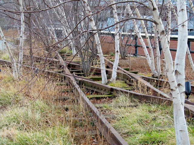 High Line rails overgrown with trees
