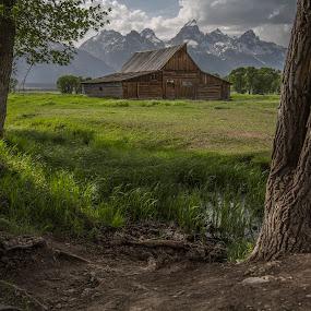 Moulton Barn by Mark Richardson - Buildings & Architecture Public & Historical ( idaho, field, barn, teton national park, grass, trees, mormon row, moulton barn )