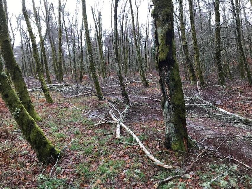Parque Biológico da Serra das Meadas encerra até 15 de março