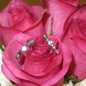 Swarovski crystal rings by Evah Banova - Artistic Objects Jewelry ( purple, blue, wedding, roses, rings, crystal, flowers, swarovski, , object, artistic, jewelry )