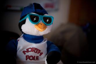 Photo: Penguin
