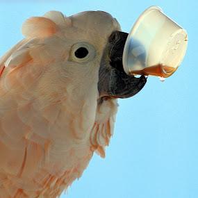 A Root Beer Shot by Colleen Rohrbaugh - Animals Birds ( animals, wildlife, birds,  )