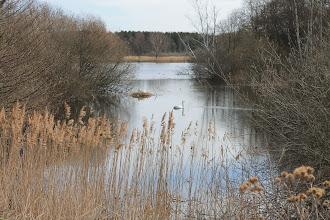 Photo: Ammetofte Mose, mellem Smørum og Ledøje