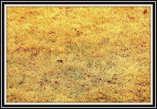 Photo: Day 339 - My Zoyia Grass in March