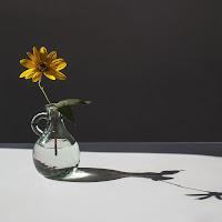 Il fiore dei fossi di