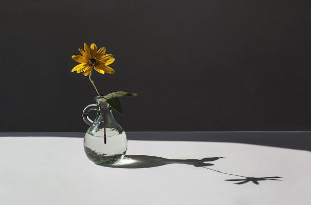 Il fiore dei fossi di mariarosa-bc