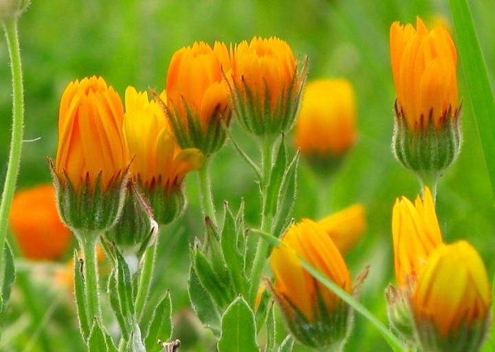 Orange Flower di Andrea Venturelli