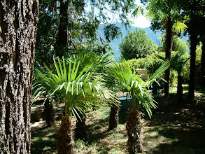 Photo: Le palme!