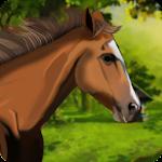 Horse Riding Adventure