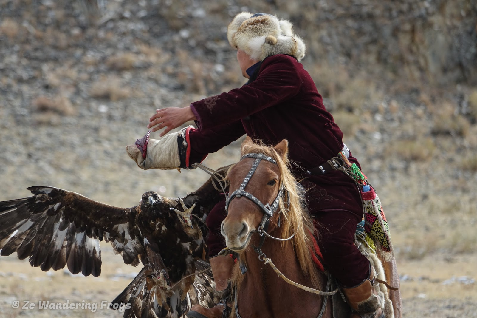 Mongolia. Golden Eagle Festival Olgii. Hunter calling the eagle