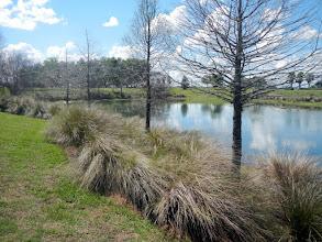 Photo: Cherry Lake Park/Mission Hills Pond, 12:33 pm