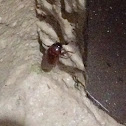 Unknown Spotting ( One Beetle )