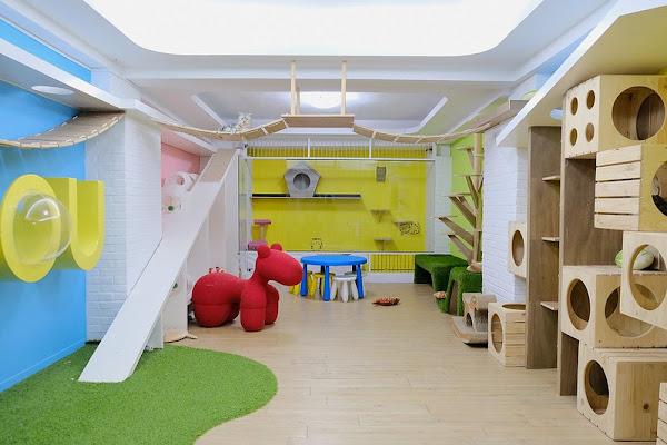 Minou Cafe 咪奴咖啡貓咪遊戲室有一群超萌可愛貓咪群!台中早午餐、義式料理、咖啡甜點下午茶!